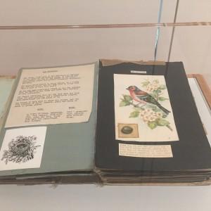 Douglas Keen's mock-up of how he envisaged a factual Ladybird Book for children, A Book of Birds & Eggs, 1952.